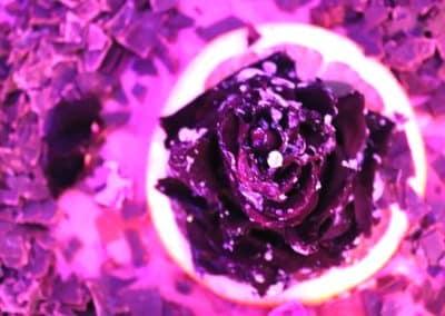Schokolade Rose